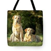 Yellow Labrador Retrievers Tote Bag