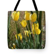 Yellow Tulips At The Arboretum Tote Bag