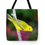 Yellow Warbler Dendroica Petechia Tote Bag