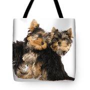Yorkie Puppies Tote Bag