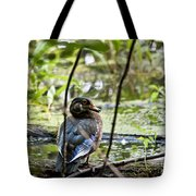 Young Wood Duck Tote Bag