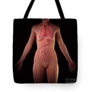 Female Anatomy Tote Bag