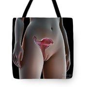 Female Reproductive System Tote Bag