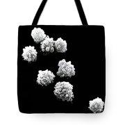Lymphocytes Undergoing Apoptosis, Sem Tote Bag