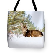Mule Deer In Snow Tote Bag