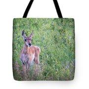 Pronghorn Antelope Portrait Tote Bag