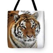 Tigre De Siberie Panthera Tigris Altaica Tote Bag