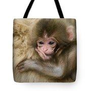 Baby Snow Monkey, Japan Tote Bag
