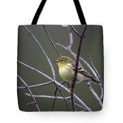 Blackpoll Warbler Tote Bag