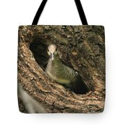 Immature Hooded Merganser Tote Bag