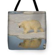 Polar Bear Walking On Ice Tote Bag