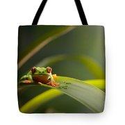 Red Eyed Tree Frog Tote Bag