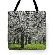 110111p265 Tote Bag
