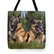 110506p116 Tote Bag
