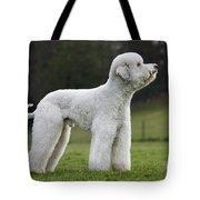 110506p121 Tote Bag