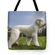 110506p134 Tote Bag