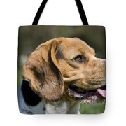 110506p141 Tote Bag