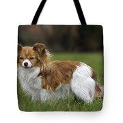 110506p148 Tote Bag