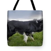 110506p164 Tote Bag