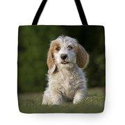 110506p211 Tote Bag