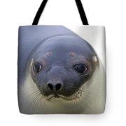 110714p130 Tote Bag