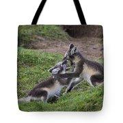 111216p027 Tote Bag