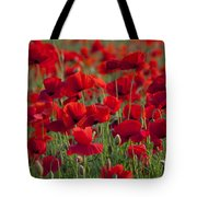111216p031 Tote Bag