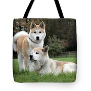 111216p239 Tote Bag