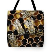 Honey Bees On Honeycomb Tote Bag