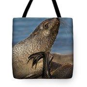 Antarctic Fur Seal Tote Bag