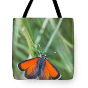 12 Balkan Copper Butterfly Tote Bag