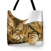 Bengal Brown Spotted Tabby Tote Bag