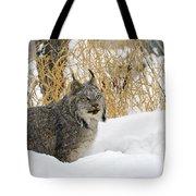 Canadian Lynx Tote Bag
