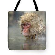 Snow Monkeys Tote Bag