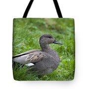 120520p321 Tote Bag