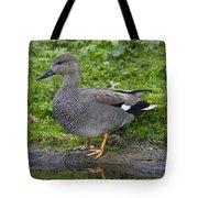 120520p324 Tote Bag