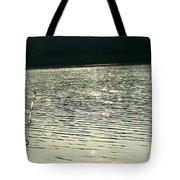 1259c Tote Bag