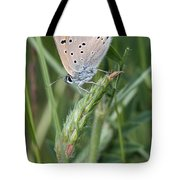 13 Balkan Copper Butterfly Tote Bag