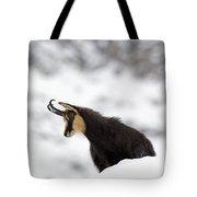 130201p229 Tote Bag