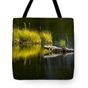 131005b-029 Forest Pond 2 Tote Bag