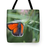 14 Balkan Copper Butterfly Tote Bag