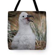 Black-browed Albatross Tote Bag