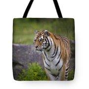 Siberian Tiger, China Tote Bag