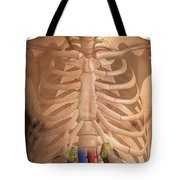 The Renal System Tote Bag