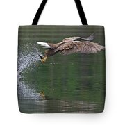White-tailed Sea Eagle In Norway Tote Bag