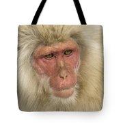 Snow Monkey, Japan Tote Bag