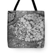 Chlamydia Tote Bag