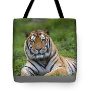 Siberian Tiger, China Tote Bag