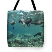 Playful Sealions In Baja Tote Bag