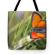 17 Balkan Copper Butterfly Tote Bag